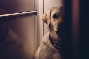 My Dog Sees Something Down the Hall